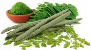 drumstick-leaves-ac-e1507384046306